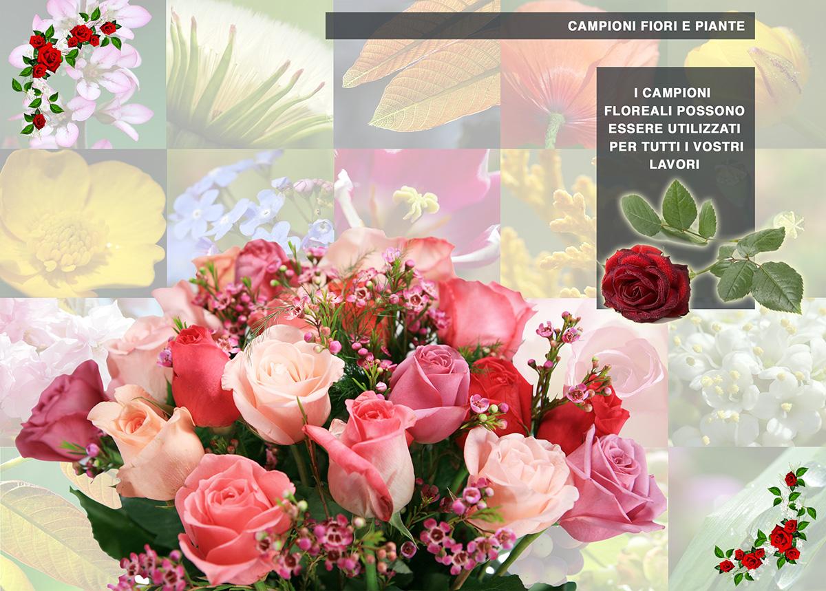 catalogo Fiori e piante